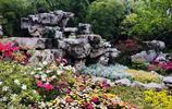 借景造物的無錫寄暢園景色迷人,此刻杜鵑花開正豔
