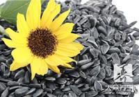 葵花籽的功效與作用,看完後要懂得利用