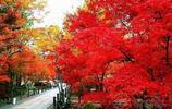香山秋景正盛
