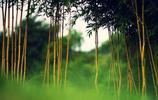 風景圖集:武夷山竹