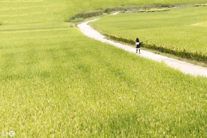 我的家鄉有一片芳草地,承載著無數兒時的夢想