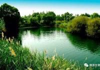 武威民勤有個鴨鳴湖,聽說美的無與倫比!