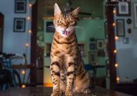 為什麼貓咪會喜歡貓薄荷?網友分享家中貓咪遇到貓薄荷的照片(二)