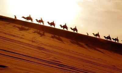 快樂的沙漠駱駝