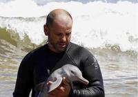 海豚寶寶被人救下,意外與海豚媽媽失散,人小心餵養海豚寶寶