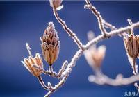 霜降應該吃什麼 霜降要預防什麼疾病