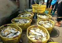 要吃海鮮到湛江,湛江人最喜歡用五花肉燜它,沒有任何技巧家鄉菜
