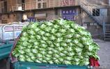 邯鄲南大堡蔬菜15日信息:蔬菜王是菜花,看今日啥菜最便宜?