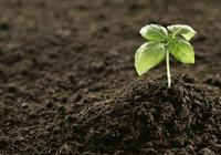 養花就選這土,不爛根,不黃葉,夏天也能蹭蹭爆盆