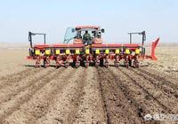 播種玉米應該注意什麼,怎樣才能高產?