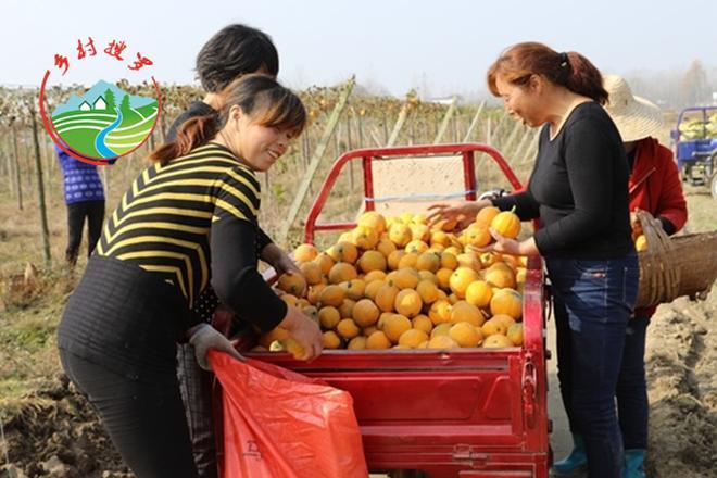 """貧困農民靠種""""金瓜""""年入27萬,一年就脫貧致富!"""