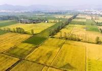 那片田野那片稻