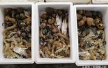 海鮮成箱買 有梭子蟹鮑魚大海螺還有皮皮蝦 一箱600元 送人有面子