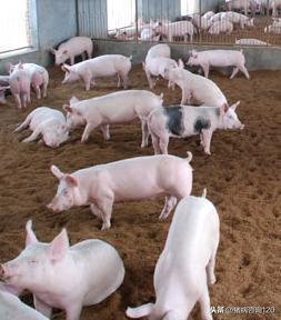 養豬20年,總結的4類治豬病的好法子