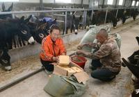 養驢大作為,驢市場緊缺?農村養驢優勢何在?