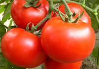 無所不能的西紅柿