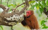 當樹懶遇上猴子 有點怪異的味道