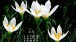 這兩種花有一個共同的名字,花語是堅毅勇敢——養在家裡很不錯