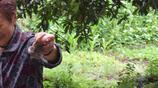 實拍慈祥的農村大媽一隻受傷的麻雀被一個農村老太救出