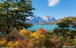 全球國家公園大發現之六:智利國家公園的美景,神奇的花朵和動物
