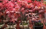 家裡多種綠植盆栽,點綴家居的同時還能健康生活