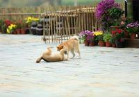 怎麼才能讓狗狗聽話,學會這5個訓狗技巧就可以了