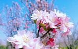 春暖花開,知道這個叫什麼花嗎?