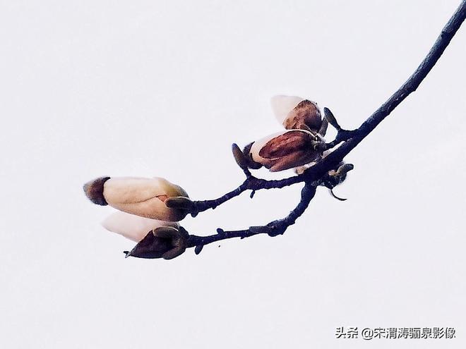 曲江、南門城牆,小編帶您看西安春天