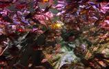 旅途隨筆 寧波海洋世界位於寧波兒童公園東首是現代化專業水族館