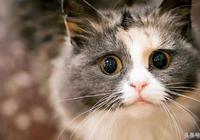 養貓之後你知道嗎?家裡這個地方細菌須注意!