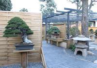 一位盆景專家的私人盆景花園!