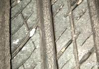 汽車輪胎6年了,磨損不厲害,但裂紋多,還能跑高速嗎?