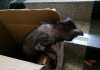 一隻哈巴狗因為滿身的皮膚病被主人拋棄,覺得可憐把它帶回了家
