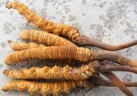 冬蟲夏草可以抗衰老嗎 冬蟲夏草的食療搭配有哪些