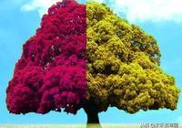 塔羅占卜:你覺得哪棵許願樹最靈驗?測你近期的願望是否會實現!