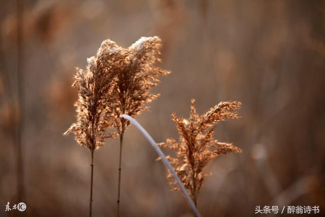 《七律 · 初秋》文/陳忠雄