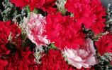 紅紅的康乃馨