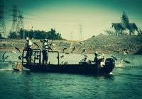 美國氾濫的亞洲鯉魚終於被賣到了中國,叫囂的吃貨們卻不肯吃