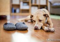 你知道嗎:狗狗如果想念一個人,會做什麼樣的事情?