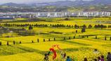 陝西漢中洋縣油菜花進入最佳觀賞期 漫山遍野一片金黃美極了
