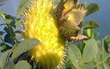 這些水果你見過嗎?你家鄉有沒?耐活好吃,當年結果想吃隨手摘
