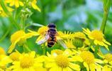 小心假的劣質蜂王漿,教你幾招鑑別出真的蜂王漿