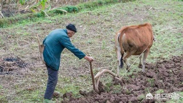 現在農村播種下田下地幹活的青年人越來越少,你怎麼看待這種事?