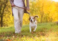 狗在排便的時候,為什麼總是回頭盯著主人?這個原因你知道嗎?