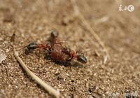 原創美文|螞蟻上樹