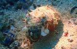 海豚灣;潛水攝影