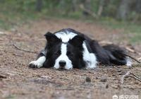 狗總是撓癢又沒蟲子,小狗老是撓身上怎麼辦?