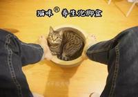 第一批90後最近開始流行用貓泡腳了,揚言說比泡枸杞還養生!
