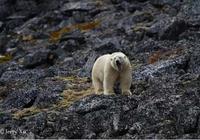 攝影大師班   如果一隻北極熊走進了袁明輝老師的鏡頭…
