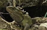 盤點 世界體型最大的五種爬行動物